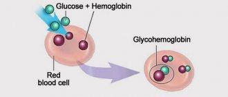 Что показывает гликозилированный гемоглобин?